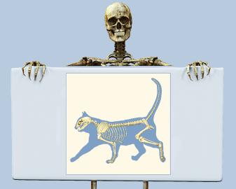 cat vs human skeleton – citybeauty, Skeleton