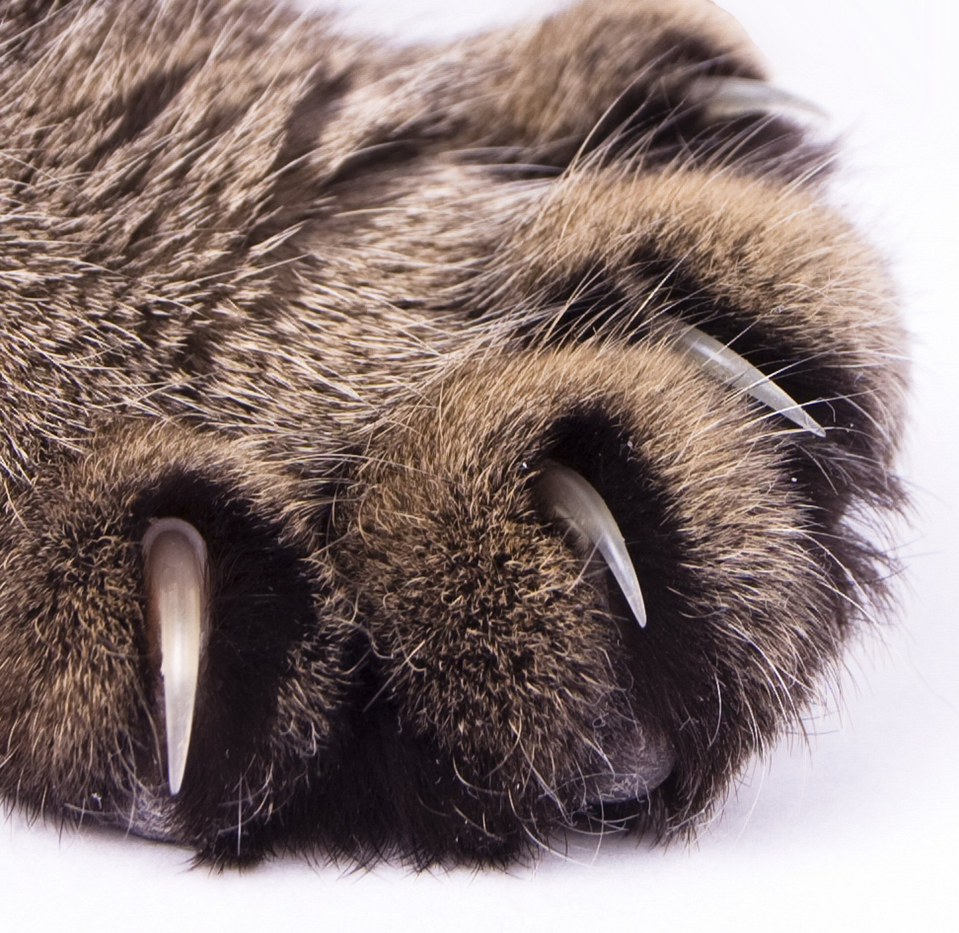 pictures of cat claws