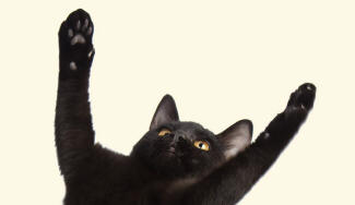Also known as paw (with reference to the feet of dogs and cats). Black Cat  Revealing Legs 365f47847